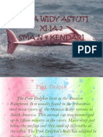 About Pink Dolphin