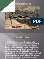 About Crocodile