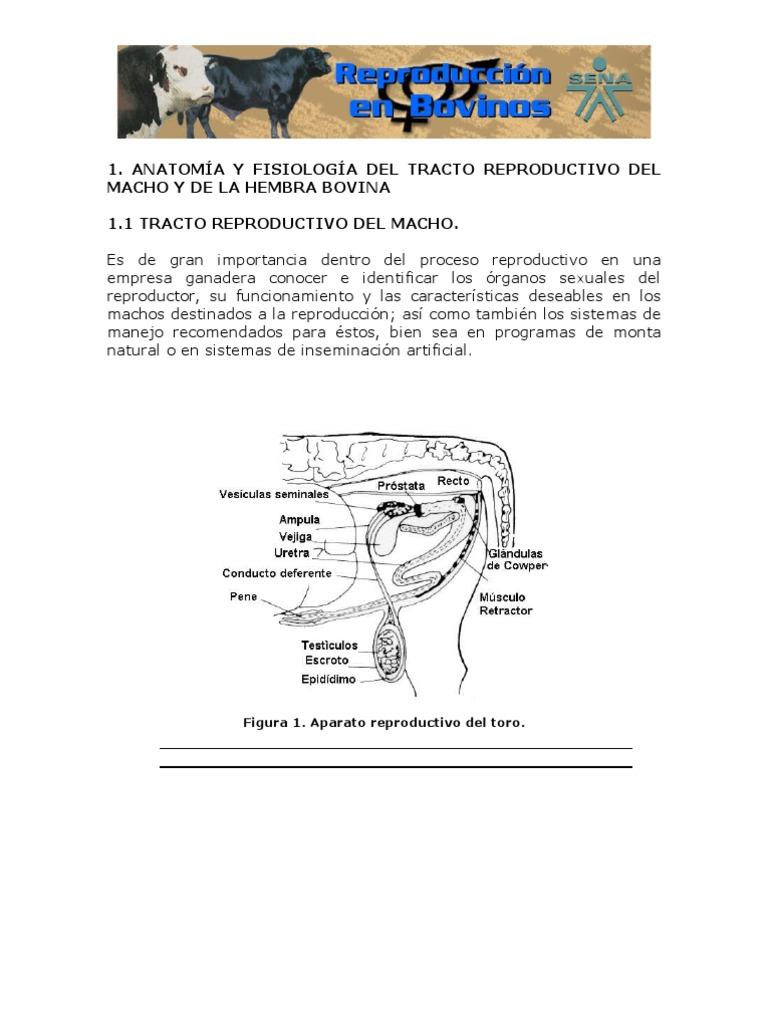 1.Anatomia y Fisiologia