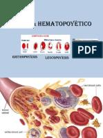 2.1 Sistema Hematopoyético