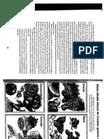Carte Retete Vegetariene Dr.laza Partea 1