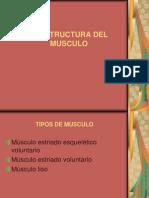 La Estructura Del Musculo