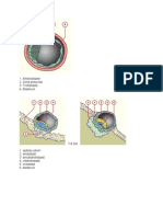Imagini embriologie