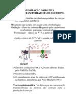 Aula - Cadeia transportadora de eletrons e Fo sforilação oxidativa 2012.2