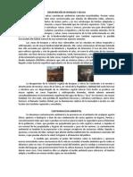 DESAPARICIÓN DE BOSQUES Y SELVAS