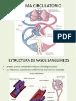 Circulatorio.pdf