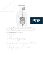 el sistema digestivo1