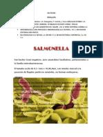 Bacterias 12