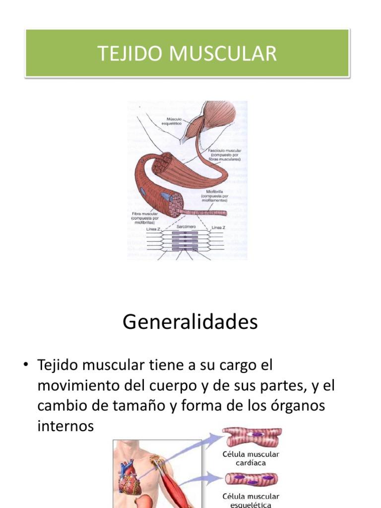 Tejido Muscular.pdf