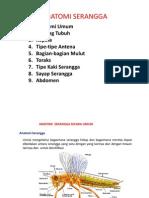 Ch.2 Anatomi Serangga