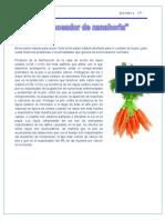 Bronceador de Zanahoria (2)