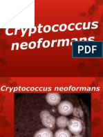 Criptococcus neoformans