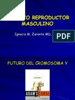 Aparato Reproductor Masculino IZ