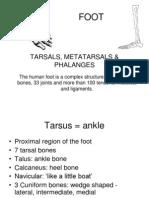 Anatomy of Feet