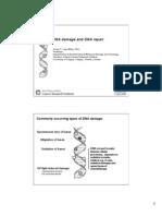 DNA Repair 2