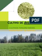 Cultivo de Avena sativa.ppt