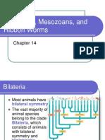 Acoelomate Bilateral Animals