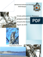 Estado Poblacional de Ctenosaura Quinquecarinata en Refugio de Vida Silvestre Chacocente