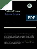 ANAT Columna Vertebral
