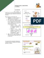 guion_practica_digestivo.pdf