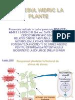 Stresul Hidric La Plante