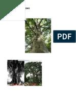 arvores sagradas no brasil no candomblé.pdf