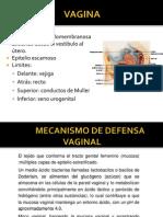 Gineco - Copia