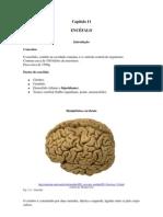 FisioSNCap11_ENCEFALO