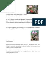 Las Cattleyas y Las Phalaenopsis