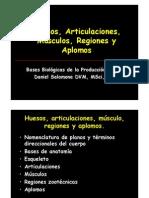 C2 HUESOS.pdf