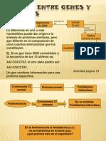 Relacion Genes y Proteinas2