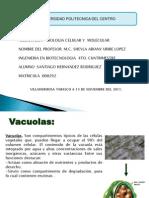 vacuola 29 11 2011
