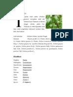 morfologi psidium refisi