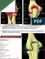 Epicondilitis Lateral y Medial