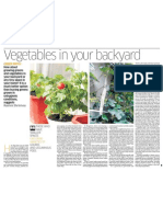 Vegetables in Your Backyard