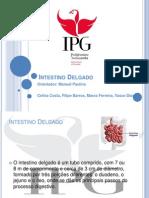 PP Instestino Delgado Anatomofisiologia.ppt