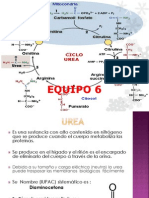 ciclodelaurea-121108201339-phpapp01
