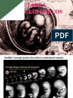 C3_Dezvoltarea Sistemului Nervos