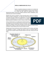 Desarrollo Embrionario Del Pollo
