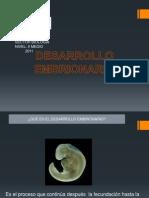 desarrollo_embrionario