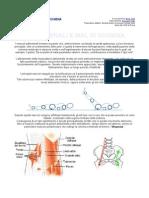 Fisioterapia - Addominali E Mal Di Schiena(1)