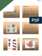 Embriologia Do Sistema Nervoso Central