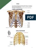 15 - Torax Anatomia y Funcion