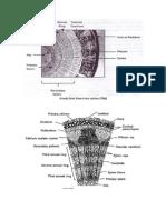 Internal Morphology Stem Images