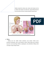 Anatomi Respirasi