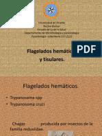 Flagelados Tisulares y Hematicos Terminado.