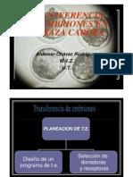 Transferencia de Embriones en Vacas Raza Carora.