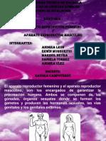 Diapositivas de Anatomia-Aparatos Reproductores