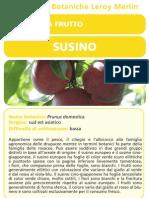 Schede botanica Susino