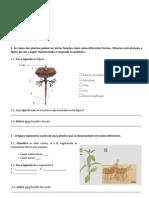Ficha de Avaliação CN5 - plantas.pdf
